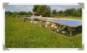 Thames Farm pasture coops1